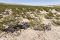 Near Cornucopia Draw - Flickr - aspidoscelis (7).jpg