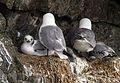 Nest (7041742525).jpg