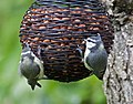 New Bird Feeder (3640709361).jpg