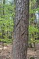 Niedersachsen, Lamstedt, im Naturschutzgebiet NIK 2762.JPG