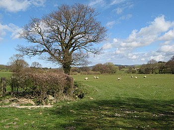 English: Oak tree An Oak tree still without le...