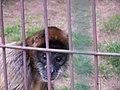 Oaklawn Farm Zoo, May 16 2009 (3539705678).jpg