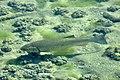 Obersee - Holzbrücke 2011-04-07 15-23-38.jpg