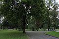 Olszanica, park w zespole pałacowym, A-792 (2).jpg