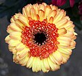 Orange and yellow flower (4005784260).jpg
