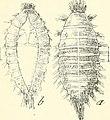 Ornithologist and oist (1891) (14769360923).jpg