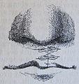 Ottův slovník naučný - obrázek č. 3154.JPG