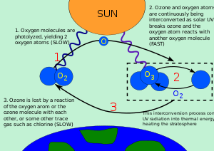 Diagram illustrating the ozone-oxygen cycle NO...
