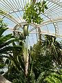 Palm House at Kew P1170564.JPG