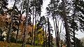 Parc Barbieux (Roubaix).jpg