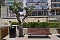 Parc d'Elx de Benidorm, arbre i banc.jpg