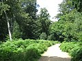 Path in Epping Forest - geograph.org.uk - 2523525.jpg