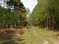 Path through Perrywood Ironshill Inclosure, New Forest - geograph.org.uk - 430700.jpg