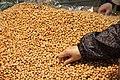Peanuts, hand picking.jpg