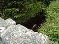 Peering at Kenick Burn from Lochenbreck Bridge in Laurieston Forest - geograph.org.uk - 484040.jpg