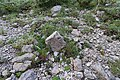 Periglacial calcareous patterned ground with Mountain Avens (Dryas octopetala) Mt Orjen subadriatic Dinarids leg P.Cikovac.jpg