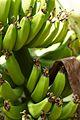 Peru - Trekking from Santa Teresa 007 - bananas (8296468251).jpg