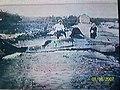 Pez damero 1927 rio jaimanitas l,os mayorkines (emilito) - panoramio.jpg
