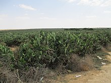 Desert farming - Wikipedia