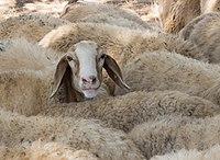 PikiWiki Israel 53057 he raised his head.jpg