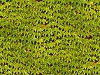 Plant-texture.jpg