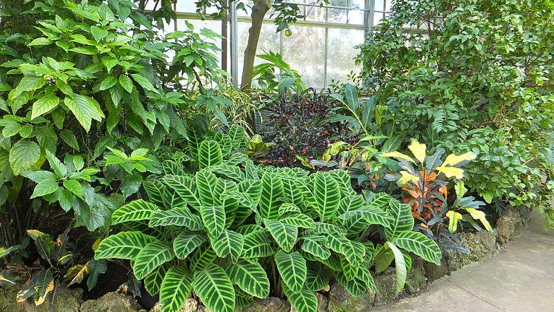 File:Plants Conservatory.JPG