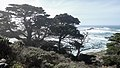 Point Lobos State Natural Reserve 1 18 19 (46078435574).jpg