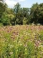 Poltava Botanical Garden (170).jpg