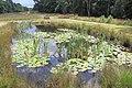 Pond aaat Kleine Kweek Schaarsbergen in summerconditions - panoramio.jpg
