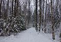 Prestegårdsskogen vinter.jpg