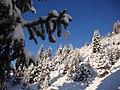 Prima nevicata del 2012 - panoramio.jpg