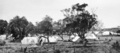 Queensland State Archives 1153 Camping ground Mooloolaba January 1931.png