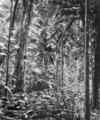 Queensland State Archives 1177 The Palm Grove Tamborine Mountain South Queensland January 1931.png