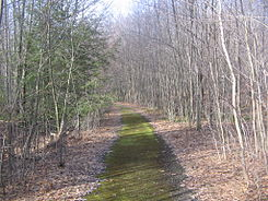 Quehanna Jet Cell Road.jpg