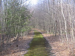 An old road in the Quehanna Wild Area