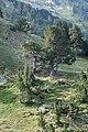 Randonnée dans les Pyrénées ariégeoises, Mont Valier.jpg