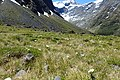 Ranunculus lyallii kz08.jpg