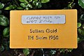 Rapperswil - Duftrosengarten - Sutters Gold TH Swim 1950 2010-08-29 16-09-26.JPG