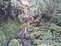 Ravine Misère Bébour - panoramio.jpg