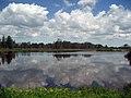 Reflections at Seney National Wildlife Refuge (9253760621).jpg