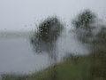 Regnfull sommer (853886660).jpg