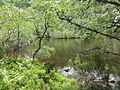 Reserva Natural Integral de Muniellos (Asturias, España) 14.JPG