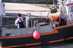 Retour de la pêche à la seiche du fileyeur Jason IV (23).JPG