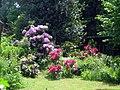 Rhododendron - panoramio (2).jpg