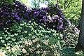 Rhododendronpark Bremen 20090513 148.JPG