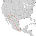 Rhus virens range map 1.png