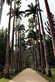 Rio de janeiro, jardim botanico, palme.JPG