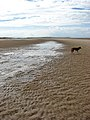 Ripples in the sand - geograph.org.uk - 909851.jpg