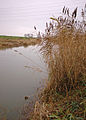 River Hull, Dunswell - geograph.org.uk - 630022.jpg