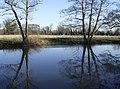 River Kennet in Burghfield, Berkshire.jpg